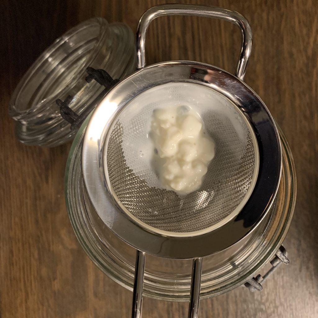Milchkefirknöllchen in einem Metallsieb